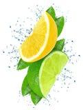 Limefrukt och citron fotografering för bildbyråer