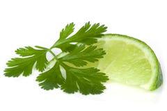 Limefrukt och koriander eller koriander fotografering för bildbyråer