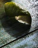 Limefrukt på ett tappningblåttbräde Arkivbilder