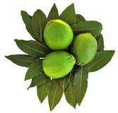 limefrukter Arkivbild