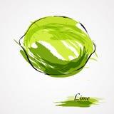 Limefruktfrukt Royaltyfria Foton