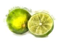 limefruktmålningsvattenfärg Royaltyfria Bilder