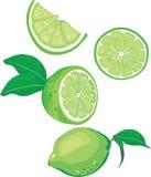 limefruktmix vektor illustrationer