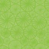 limefruktmodell Royaltyfria Bilder