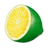 limefruktstycke Royaltyfri Fotografi
