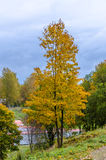 Limeira do outono sobre um monte Fotografia de Stock Royalty Free