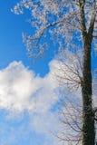 Limeira no fundo do céu do inverno fotografia de stock royalty free