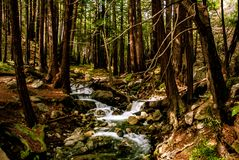 Limekiln ρεύμα με Redwoods στοκ εικόνες