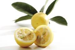 Limequats närbild arkivfoto