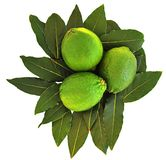Limes. Three Limes on a bed of leaves Stock Photography