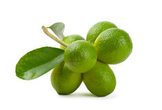 Limes. On a branch on white background Stock Photo