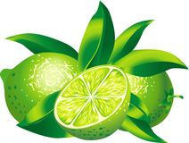 Limes. Raster version of vector  image of two limes Royalty Free Stock Photos