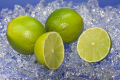 Limes. Fresh limes on top of ice Stock Photos