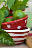 Limes in bowl. Green limes in red bowl Stock Photo