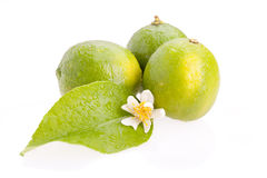 Limes Closeup Stock Images