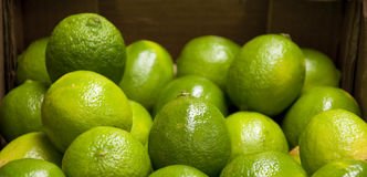 Limes closeup royalty free stock photo