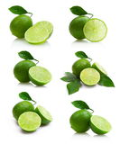 Limes collection. Set of six lime images Stock Image