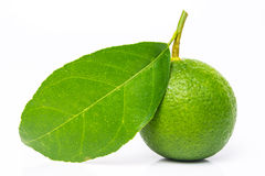 Limes with green leaf Royalty Free Stock Photography
