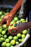 Limes- Guatemala. Man's hands holding limes at Friday market in the small village of San Francisco El Alto- near Quetzaltenango, Guatemala Royalty Free Stock Images