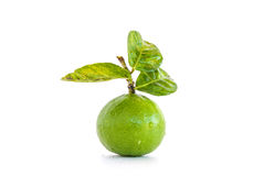 Limes and leaves isolated Royalty Free Stock Photography