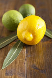 Limes and lemon Stock Photography