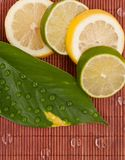Limes and Lemon Slices Stock Photos
