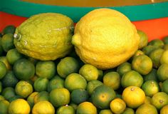 Limes and Lemons Royalty Free Stock Image