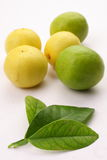 Limes with lime tree leaf,. Organic limes with lime tree leaf, in white background royalty free stock photo