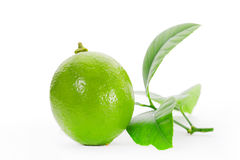 Limes sliced isolated on white background Royalty Free Stock Images