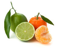 Limes and tangerines Royalty Free Stock Images