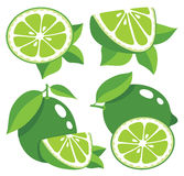Limes vector illustration Stock Photography