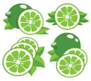 Limes vector illustration Stock Photo