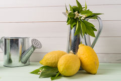 Limes and vintage metal retro watering cans Stock Photos