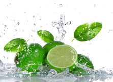 Limes with water splash Stock Photo