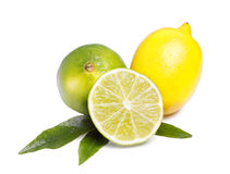 Limes and yellow lemon. Green limes and lemon isolated on white background Royalty Free Stock Image