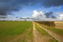 Limestone bridleway Stock Photo