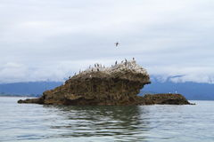 Limestone cliffs. Are home to a large colony of spotted shags, Abel Tasman National Park, New Zealand Stock Photos