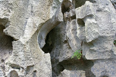 Limestone. The close-up of limestone with leaching fissures royalty free stock image