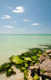 Limestone covered with seaweed at Royalty Free Stock Images