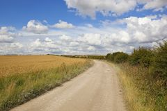 Limestone farm track and wheat Royalty Free Stock Photos