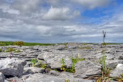 Limestone Field in the Burren, Ireland.  royalty free stock images
