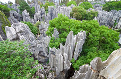 Limestone forest at Kunming Stone forest or Shilin stock images