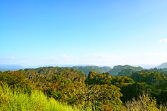 Limestone Forest in Laos Royalty Free Stock Photo