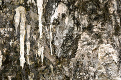 Limestone Formations in Western Australia Royalty Free Stock Image