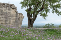 Limestone Fortress Wall with Tree and Flowers, Mountain Landscape View in Background Stock Photos