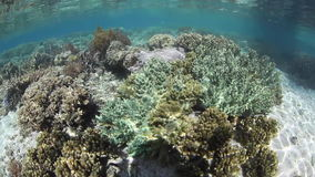 Limestone Islands and Reef stock footage