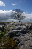 Limestone Landscape Royalty Free Stock Photo