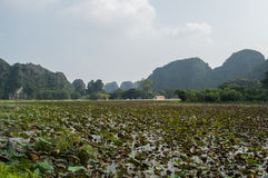 Limestone Landscape with Water Lilies and House, Tam Coc, Vietnam. Limestone Landscape with Water Lilies and House, Tam Coc in Vietnam Stock Photos