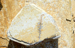 Limestone with Manganese dendrites Royalty Free Stock Photo