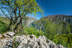 Limestone mountains Stock Images